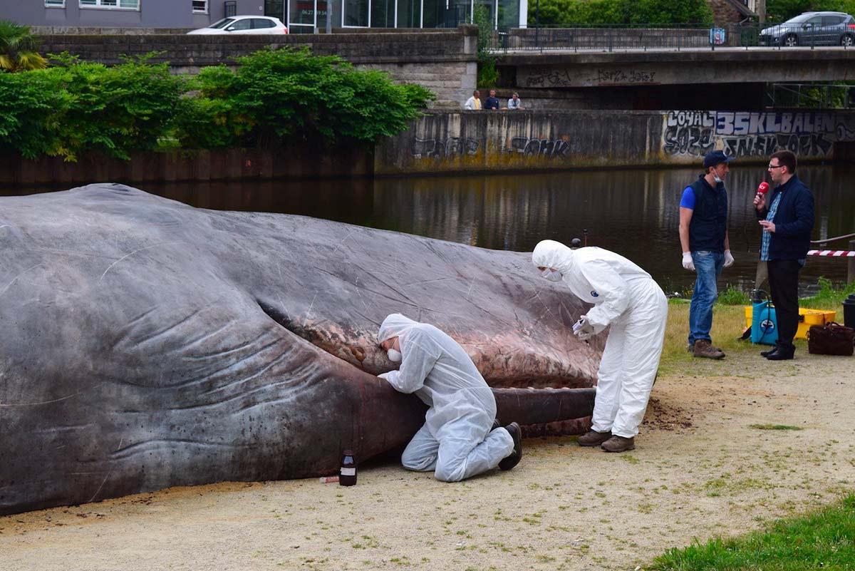 Une baleine à Rennes