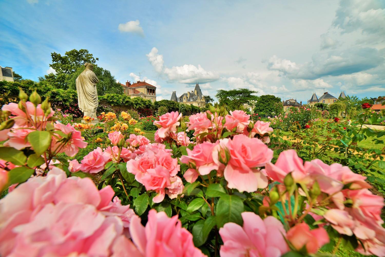 Les roses du Thabor