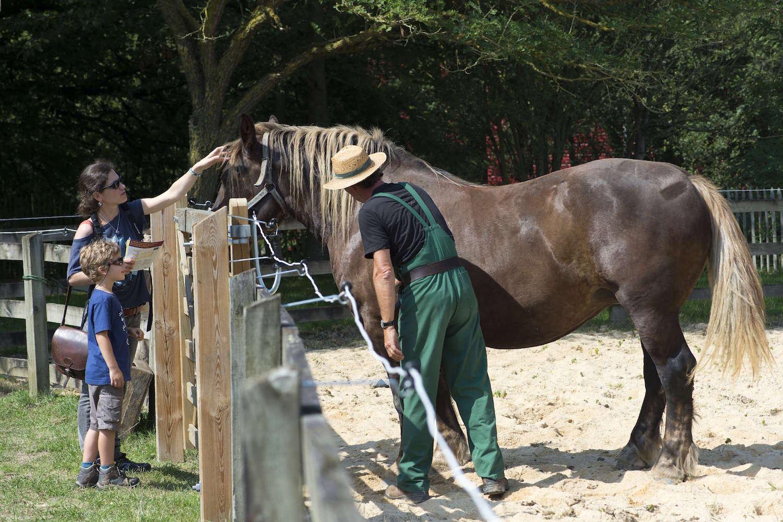 Cheval breton de l'Ecomusée du pays de Rennes