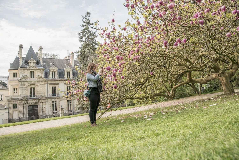 Magnolias du jardin du Thabor de Rennes