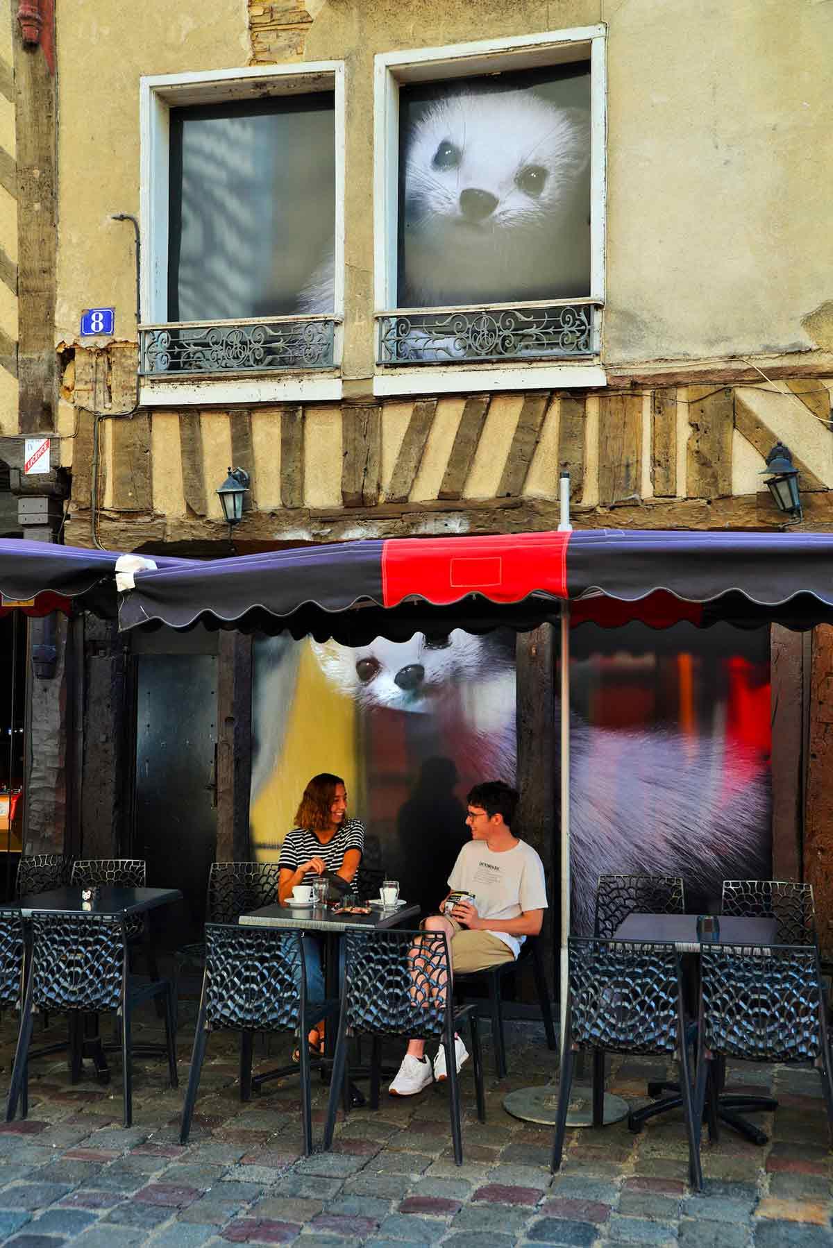 Hermine de la rue Saint-Michel de Rennes
