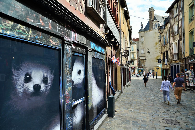 Hermines rue aux foulons à Rennes