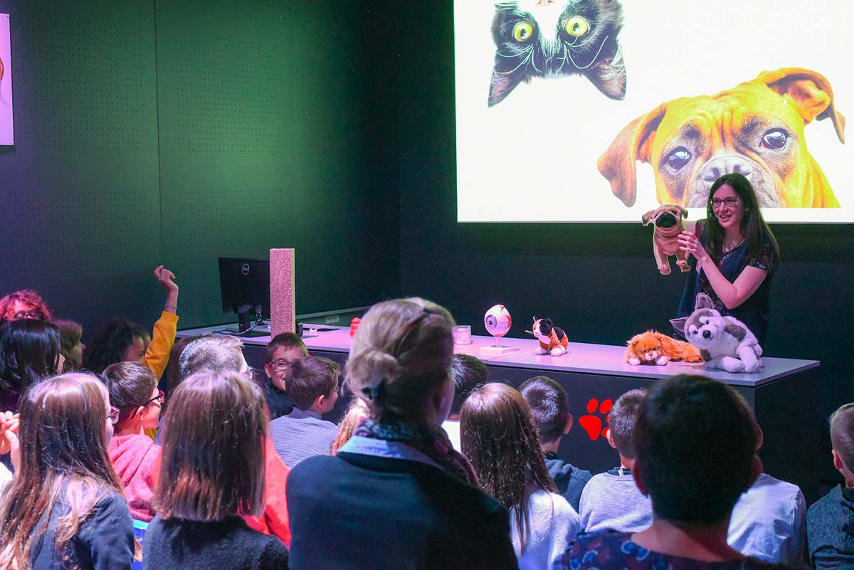 Animations exposition chiens & chats