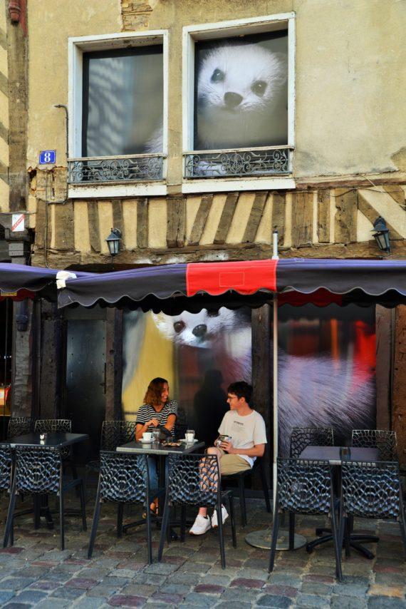 hermines-rue-saintmichel-visite guidée-rennes2020