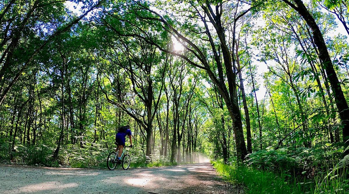 A travers le bois de Cicé à vélo
