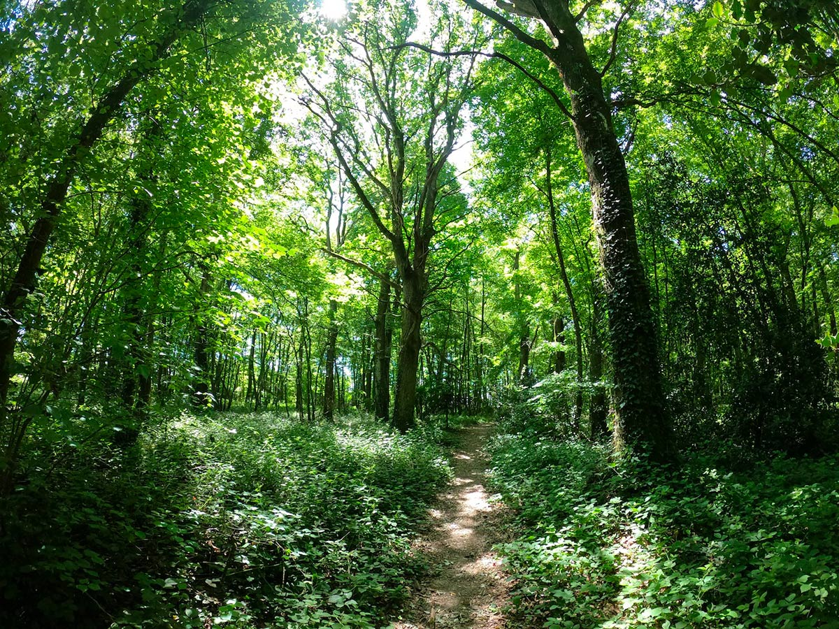 Bois de la Motte - Le Rheu