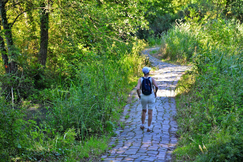 Balade dans le parc de Bréquigny