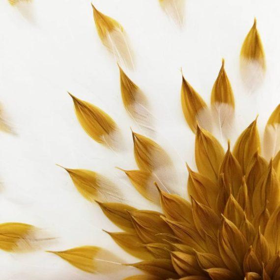 melissa-pasquiet-1-2481
