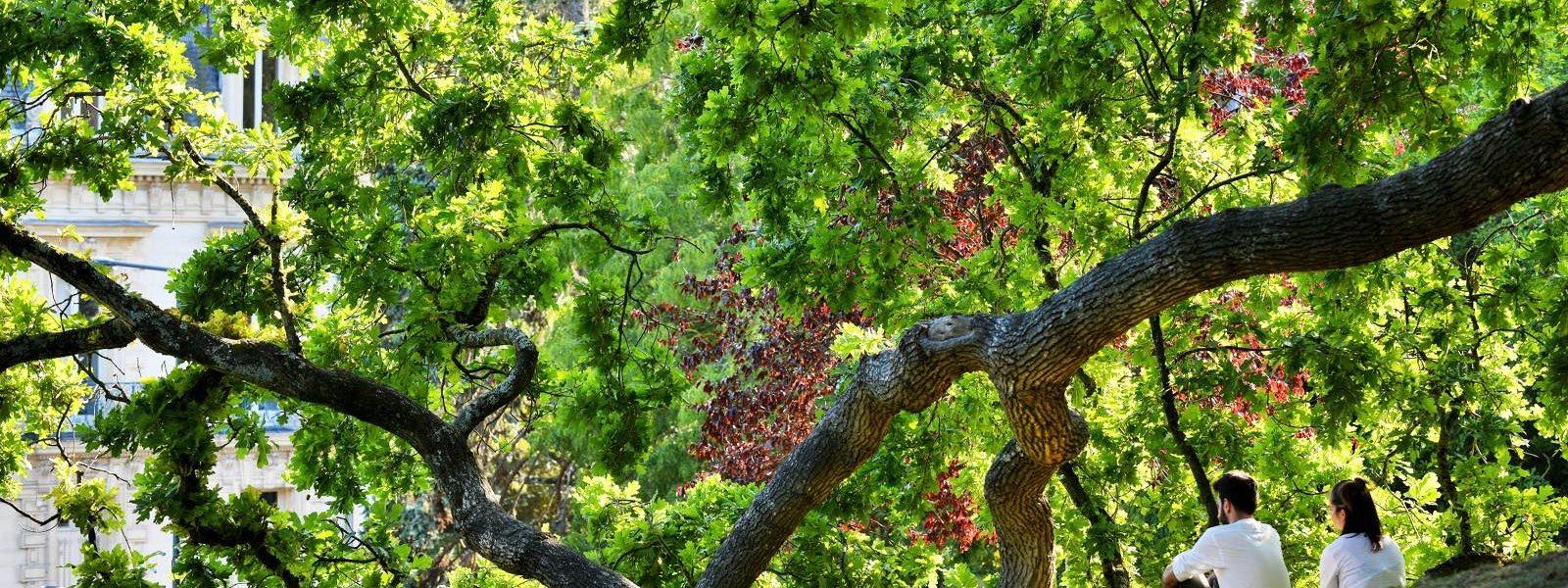 Dans le parc du Thabor