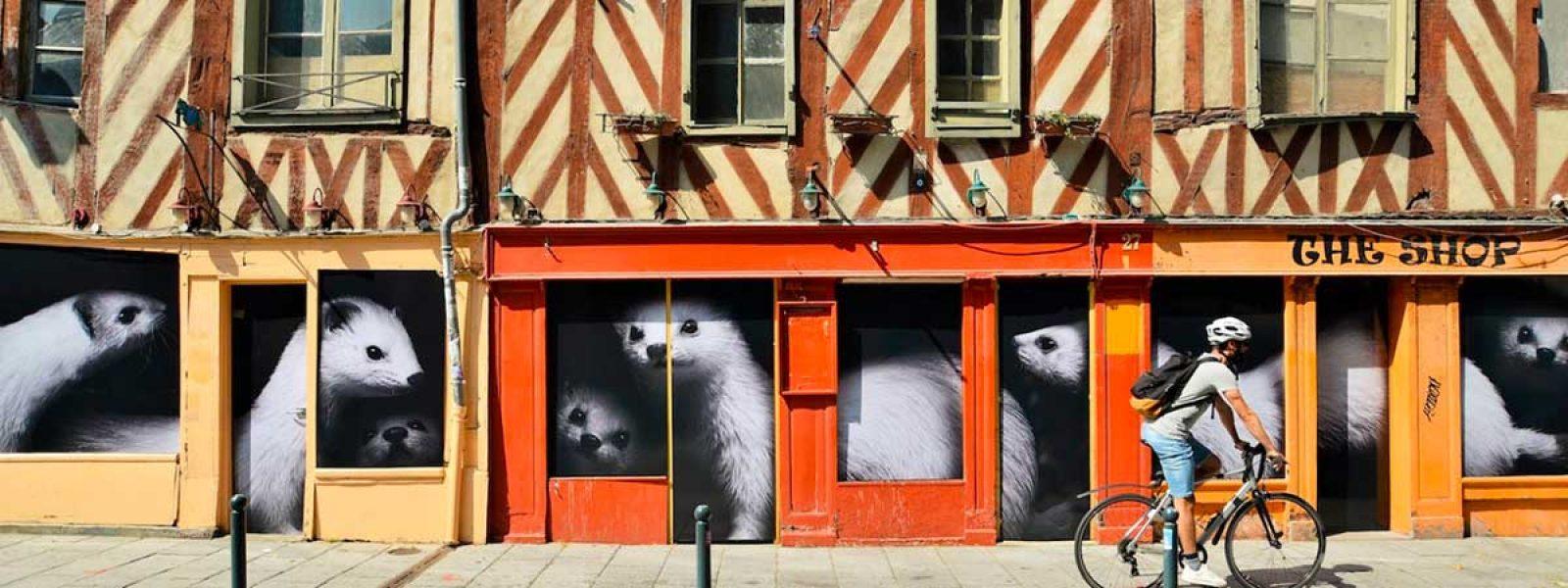 Les hermines de la rue de Penhouet à Rennes